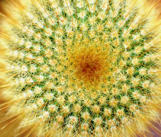 http://www.dreamstime.com/stock-photo-top-yellow-tower-cactus-image27448940