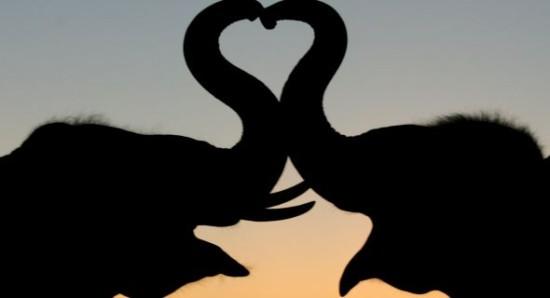 elefantes 3